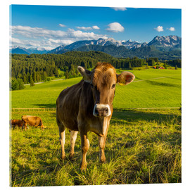 Akrylbillede  Funny Cow in the Alps - Michael Helmer