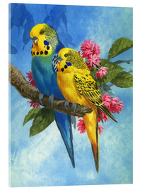 Akrylbillede  Budgies on Blue Background - John Francis