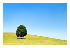 Premium-plakat Lonely tree on a green meadow
