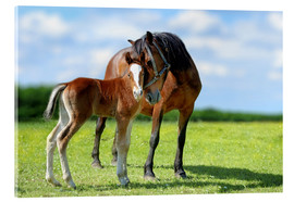 Akrylbillede  Mother Love - mare with foal