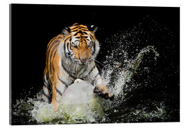 Akrylbillede  Tiger Makes the water
