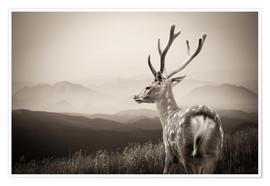 Premium-plakat  Stag in the mountains