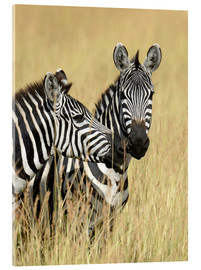 Akrylbillede  Zebra friendship