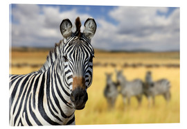 Akrylbillede  View of zebras