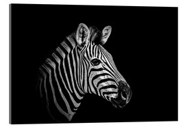 Akrylbillede  Zebra - close up