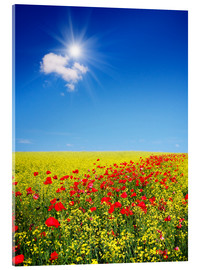 Akrylbillede  Sunny landscape with flowers in a field