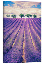 Lærredsbillede  Lavender field with trees in Provence, France