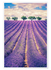 Premium-plakat  Lavender field with trees in Provence, France