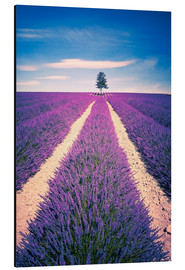 Print på aluminium  Lavender field with tree in Provence, France