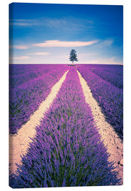 Lærredsbillede  Lavender field with tree in Provence, France
