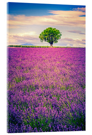 Akrylbillede  Lavender field with tree in Provence, France