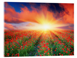 Akrylbillede  Sunset over a field of red poppies