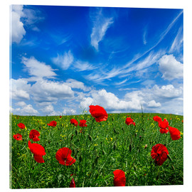 Akrylbillede  Red poppies on green field