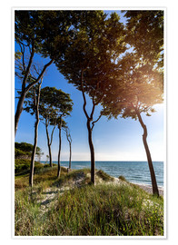 Premium-plakat Tall Trees at the Baltic Sea