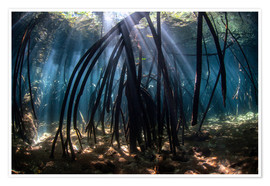 Premium-plakat Beams of sunlight in a mangrove forest