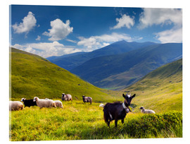 Akrylbillede  Herd of sheep and goats in the mountains