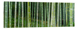 Akrylbillede  Green bamboo forest in Kyoto, Japan - Jan Christopher Becke