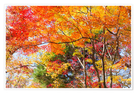Premium-plakat Colorful autumn leaves in the forest
