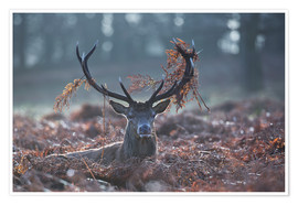 Premium-plakat Deer stag in the brushwood