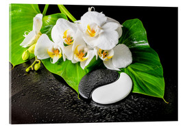 Akrylbillede  White orchids and Yin-Yang stones