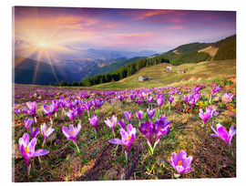 Akrylbillede  Crocuses and the sun in spring