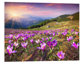 Print på skumplade  Crocuses and the sun in spring