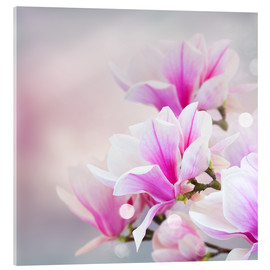 Akrylbillede  Magnolia flowers on bokeh background