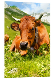 Akrylbillede  Cow with bell on mountain pasture