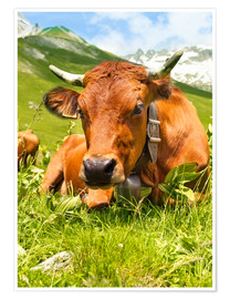 Premium-plakat  Cow with bell on mountain pasture