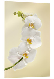 Akrylbillede  White orchid
