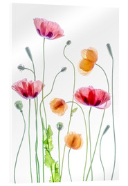 Akrylbillede  Poppy dance - Mandy Disher