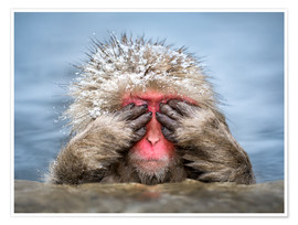 Premium-plakat Japanese Macaque in a hot spring