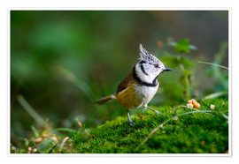 Premium-plakat  Cute tit standing on the forest ground - Peter Wey