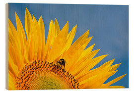 Print på træ  Sunflower against blue sky - Edith Albuschat