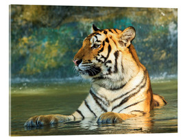 Akrylbillede  Tiger lying in the water