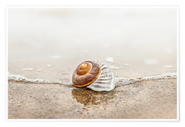 Premium-plakat Lonely shell on a beach