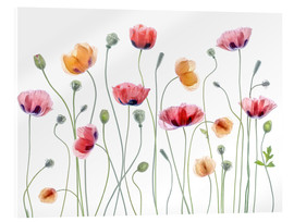 Akrylbillede  Papaver Party - Mandy Disher