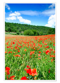 Premium-plakat Poppy fields near Covarrubias
