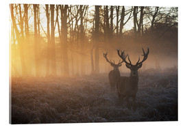 Akrylbillede  Two deers in Richmond Park, London - Alex Saberi