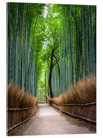 Akrylbillede  Bamboo Forest in Kyoto Sagano Arashiyama, Japan - Jan Christopher Becke