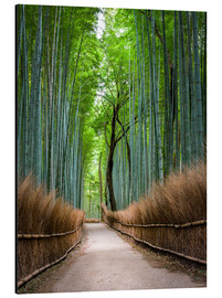 Print på aluminium  Bamboo Forest in Kyoto Sagano Arashiyama, Japan - Jan Christopher Becke