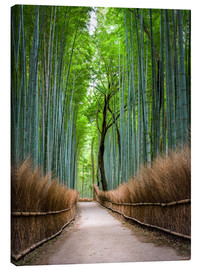 Lærredsbillede  Bamboo Forest in Kyoto Sagano Arashiyama, Japan - Jan Christopher Becke