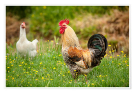 Premium-plakat Chickens in the meadow