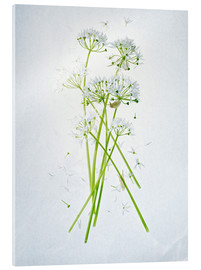 Akrylbillede  Allium ursinum, medicinal herb - Axel Killian