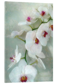 Akrylbillede  Composition of a white orchid with transparent texture - Alaya Gadeh