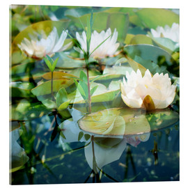 Akrylbillede  Montage of white water lilies - Alaya Gadeh