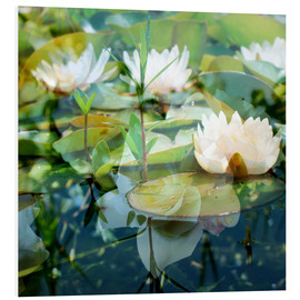Print på skumplade  Montage of white water lilies - Alaya Gadeh