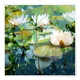 Premium-plakat Montage of white water lilies
