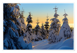 Premium-plakat Snow-covered spruce trees at sunrise on Wurmberg in the Harz