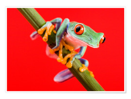 Premium-plakat  Tree frog on red